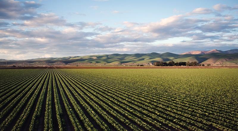 COMUNICATO STAMPA AGRICOLTURA, ZINGARETTI: 15 MILIONI DI EURO PER 214 GIOVANI AGRICOLTORI DEL LAZIO